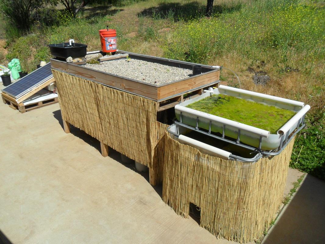 Backyard Aquaponics Kit : large aquaponics kit $ 1500 00 add to cart large aquaponics kit comes
